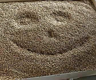 Foto van Brouwcafé de Molen in Bodegraven
