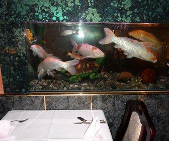 Restaurant Havenstad