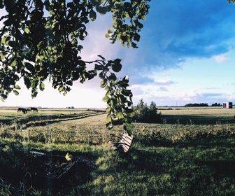 Weidumerhout